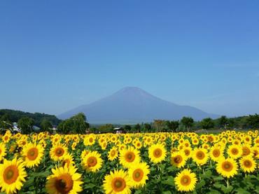写真:山中湖花の都公園