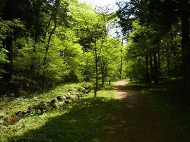 写真:山中湖文学の森公園