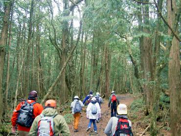 写真:山中湖ハイキングコース